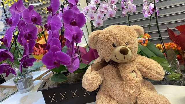 Pelucias e flores